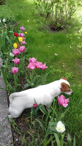 Psi blog