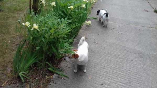 Aria i Suita przy grządce kwiatowej