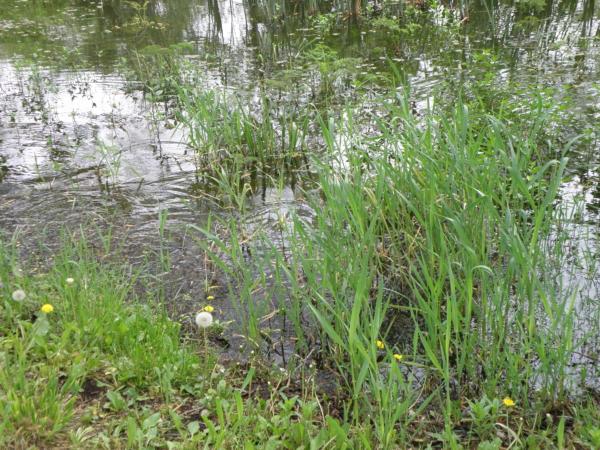 Woda i zielona trawa