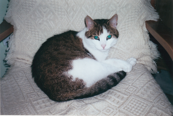 Kot Gawot