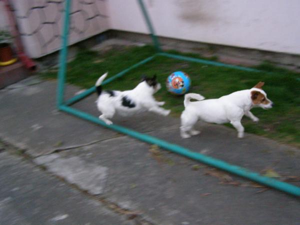 Piłka w bramce