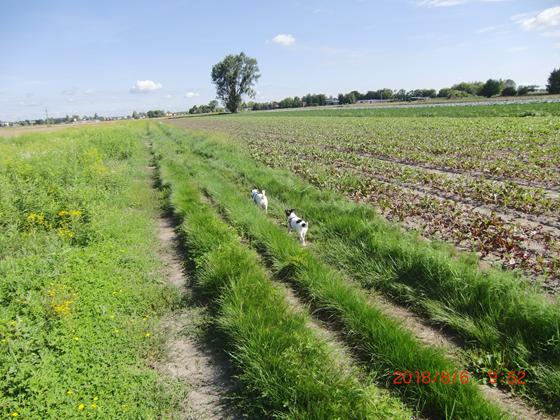 Spacer przez pola
