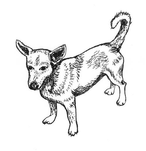 Pomoc bezdomnym psom