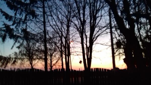 Zachód słońca za drzewami