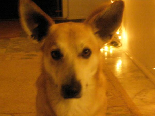 Pies Ochlapek