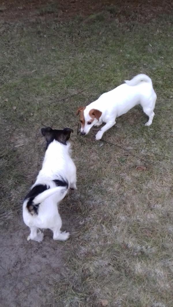Nasz psi jadłospis