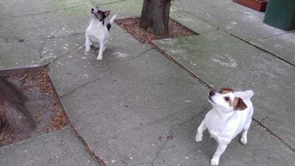 Co robi pies sąsiadów?