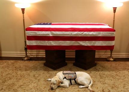 Pies w żałobie