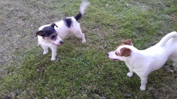 Aria i Suita na trawniku