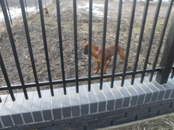 Pies napotkany w czasie spaceru