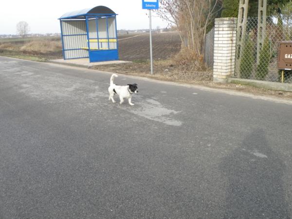 Pies, który wpadł Arii w oko