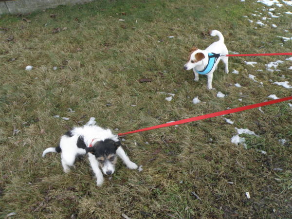 Suita nie pozwala Arii poznawać innych psów