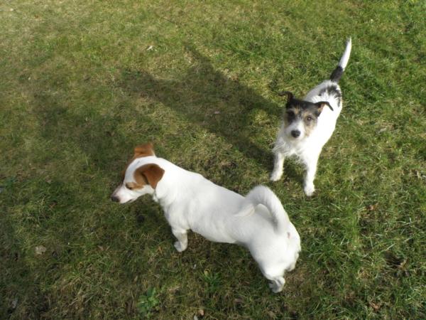 Suita i Aria na trawniku