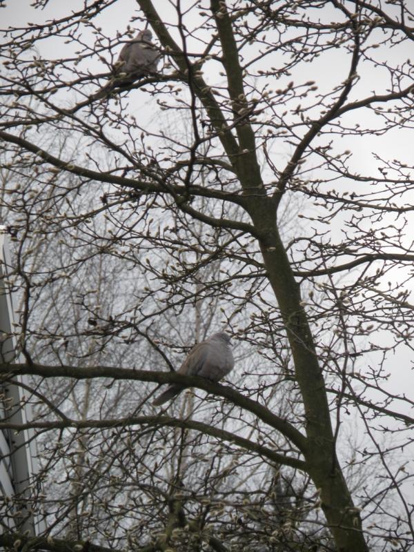 Bezczelne gołębie.