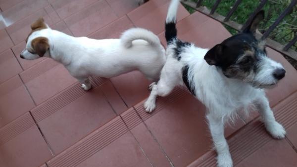 Aria i Suita na schodach
