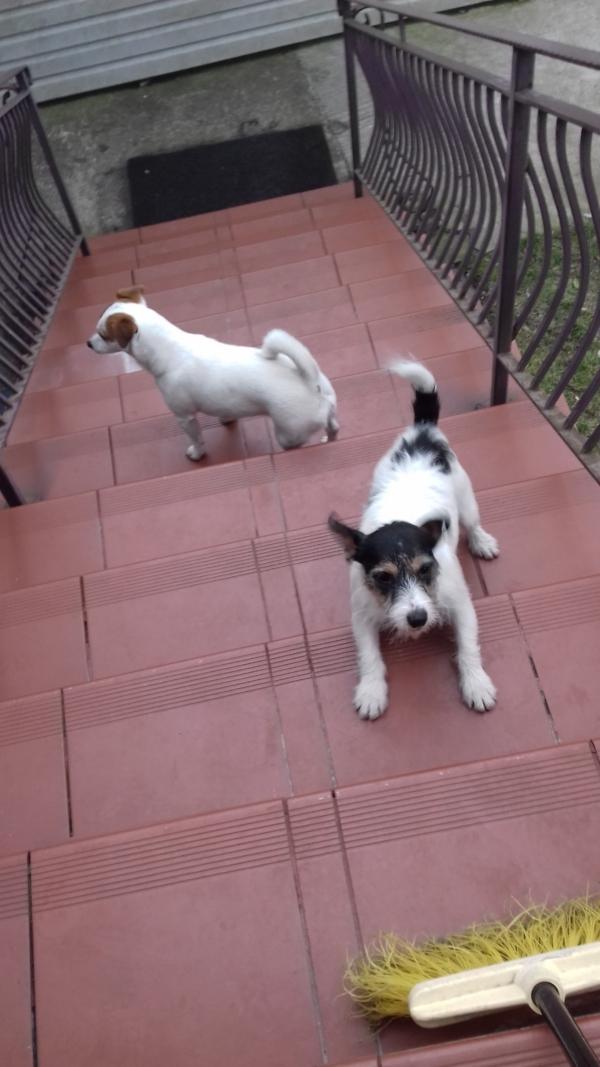 Aria zaczajona na miotłę na schodach