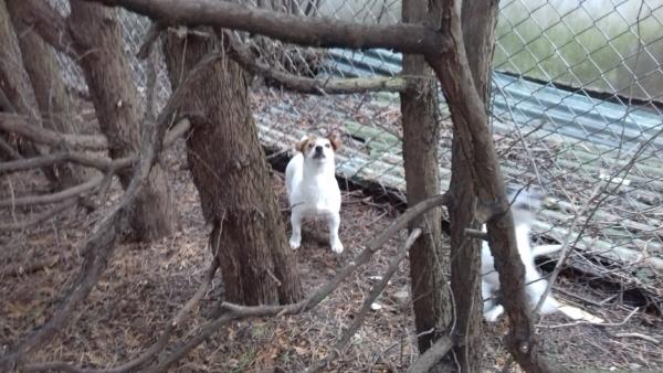 Aria, szybciej ścinaj to drzewo, bo gołębie odlecą!