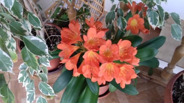Kwitnący kwiatek
