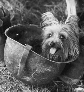 Pies wojenny, Smoky