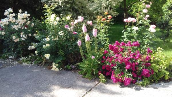 ogród Pani