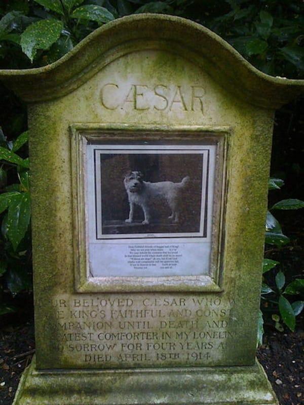 Caesar of Notts. Królewski pieseczek