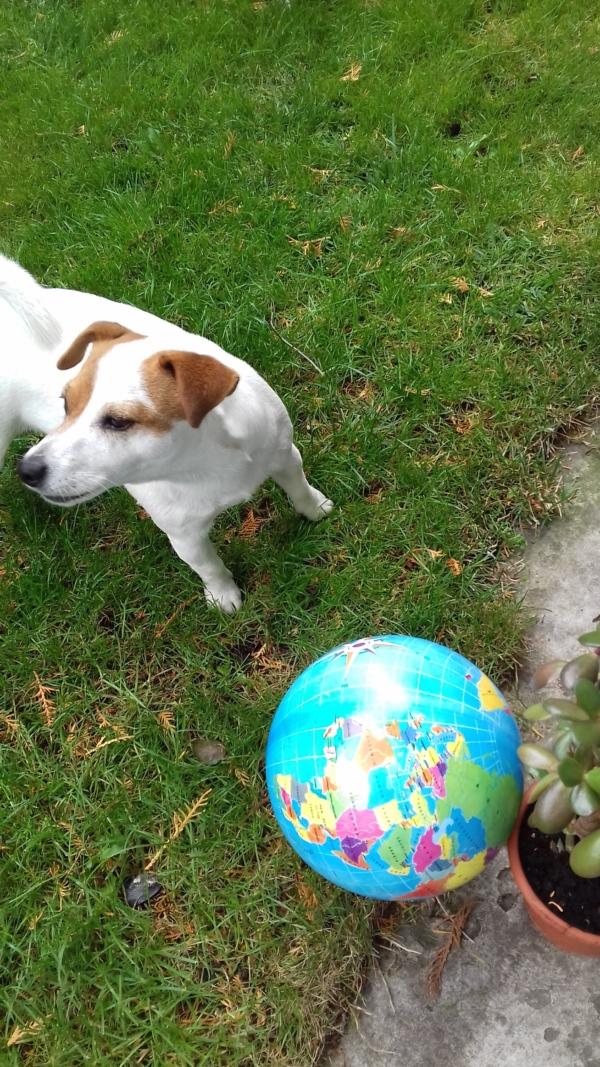 Psie zawody sportowe