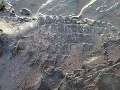 Pies paleontolog