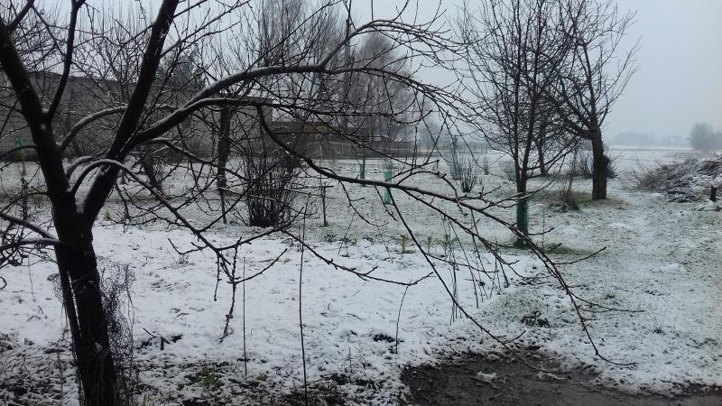 Zieleń  w śniegu.
