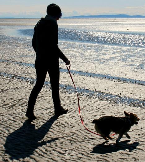 Kwarantanna – jak zarobić na psie?