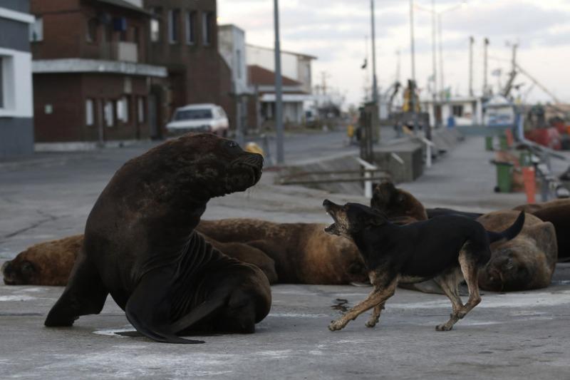 Pies morski i pies lądowy