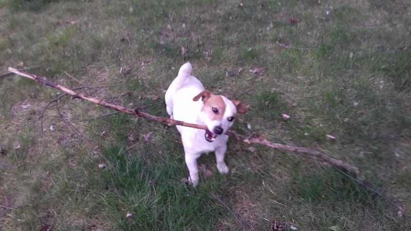 Uprawiamy psie sporty.