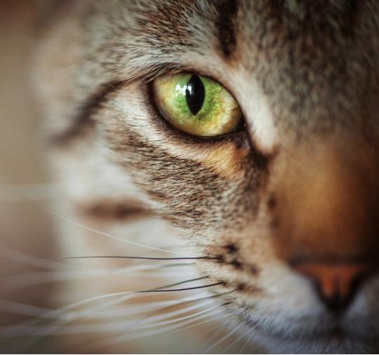 Ostrzeżenie dla kotów
