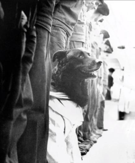 Porucznik Miś w czasie apelu