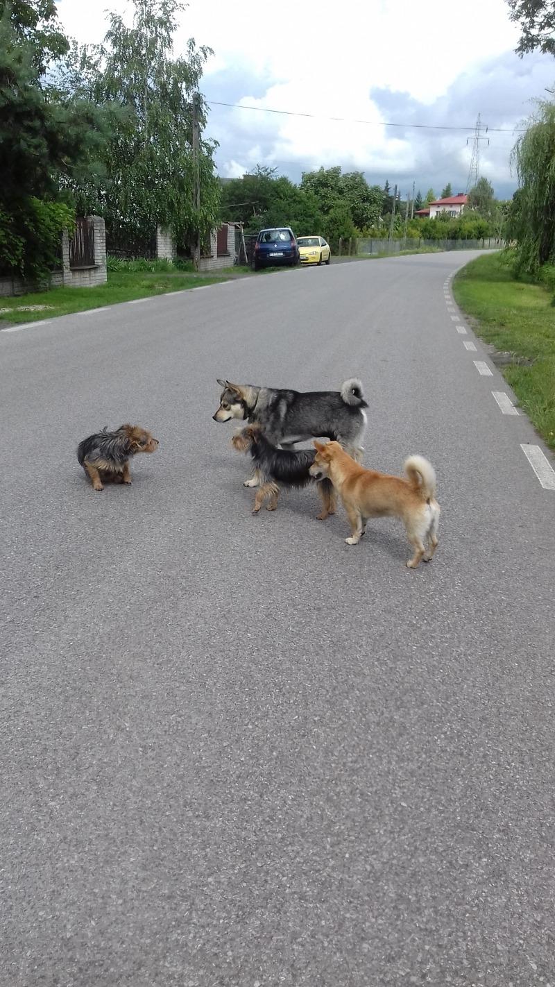 Psie zgromadzenie.