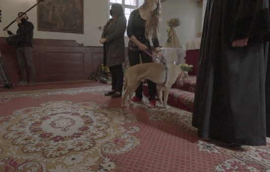 Psy w kościele