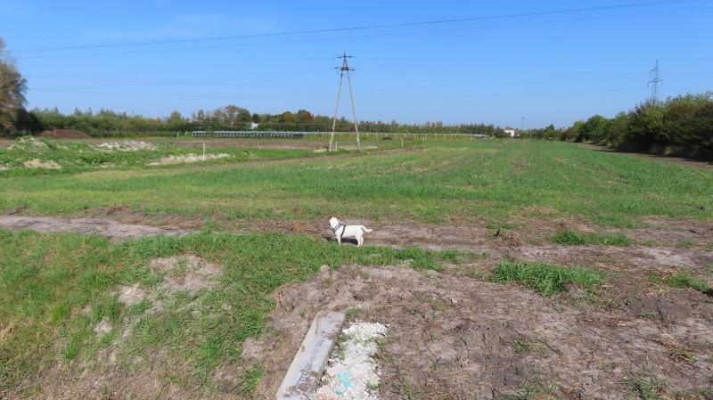 Szczere pole