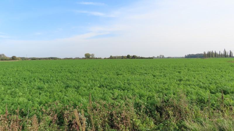 Krajobraz z sarnami
