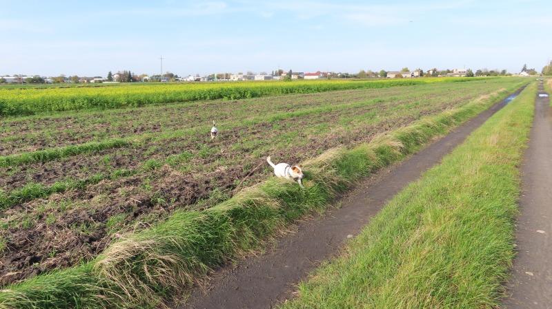 Droga między polami