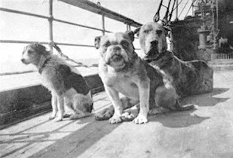 Psy z Titanica