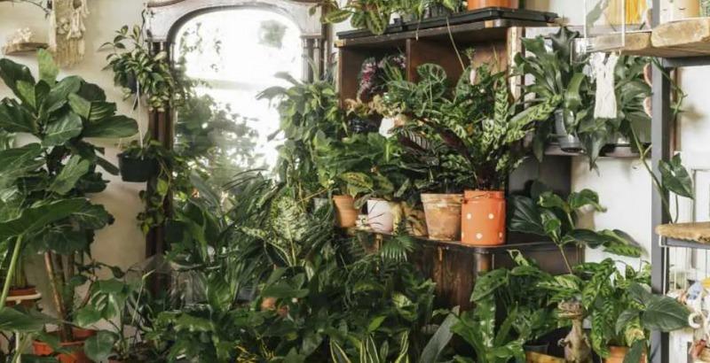 Schronisko dla Roślin