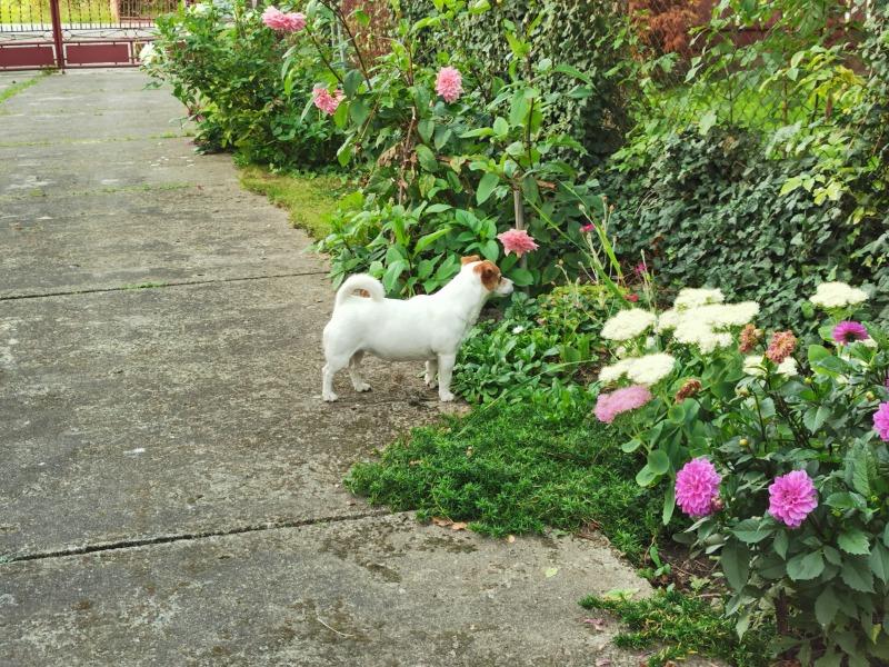 Pies sąsiada.